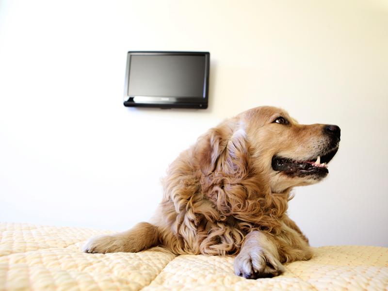 Hotel Sul Mare Che Accettano Cani