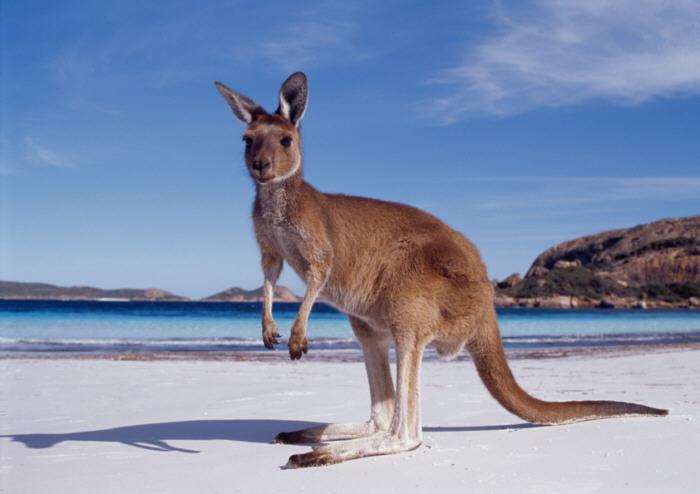Hai visto? I consigli per viaggiare in Australia