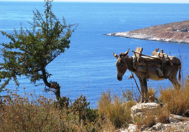Hai visto? Viaggi e partenze: i traghetti per l'Albania