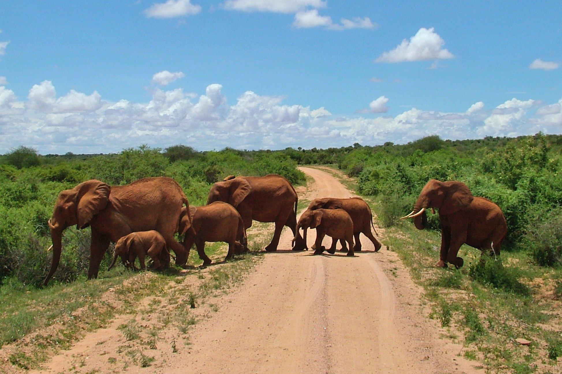 Hai visto? Consigli e suggerimenti per un safari in Kenya