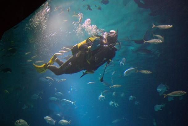 Hai visto? Fare riprese subacquee con GoPro