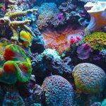Dove si trova la Barriera Corallina