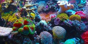 Hai visto? Dove si trova la Barriera Corallina